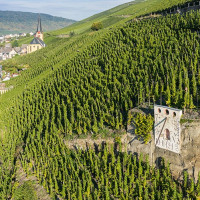 mosel-riesling